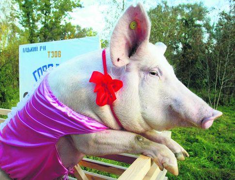 Объединяющая идея. У граждан Украины – разные предки,но большинство из нас любит свинину.