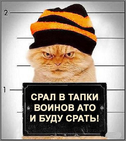Catbeline.jpg
