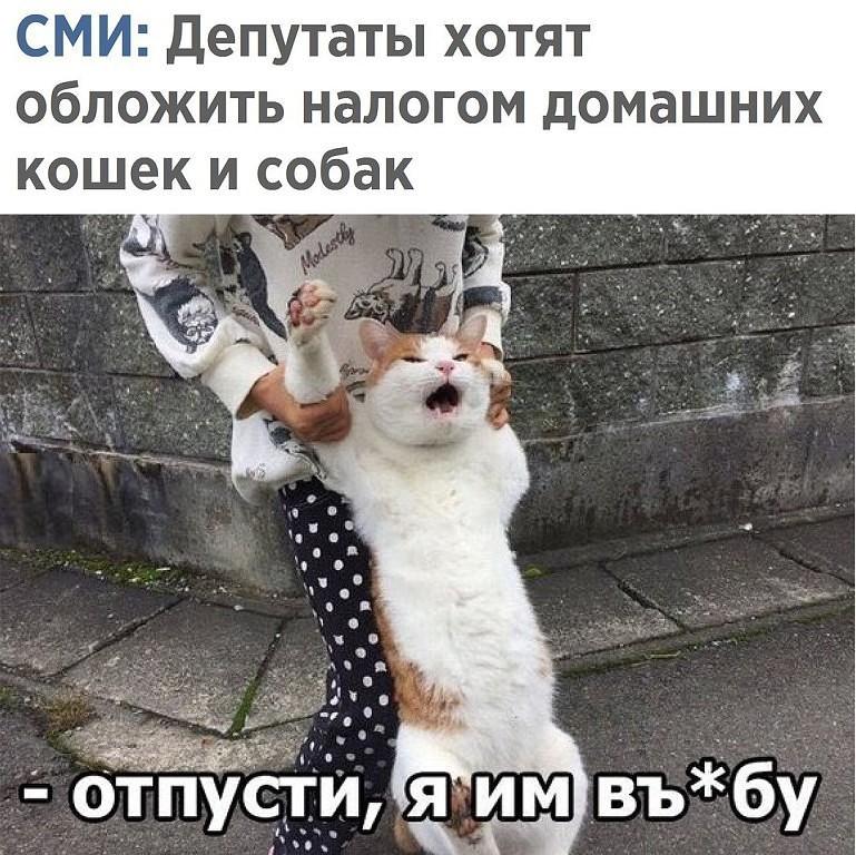 imageCatinfury.jpg