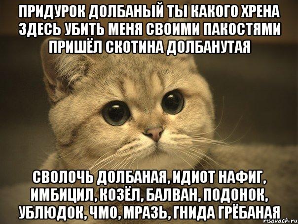 pidrila-ebanaya-kotik_11965616_orig_.jpeg
