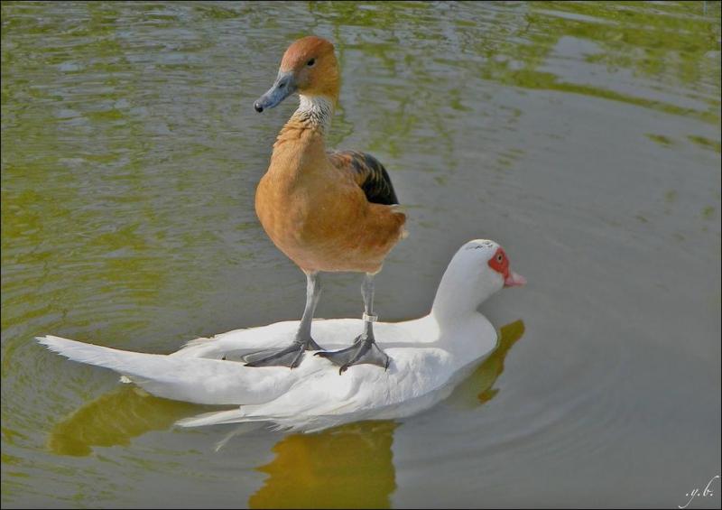 birds-1421.jpg