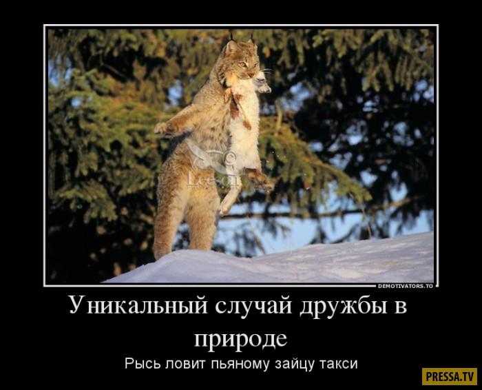 1481685607_25.jpg