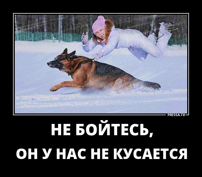 1509328714_d13.jpg