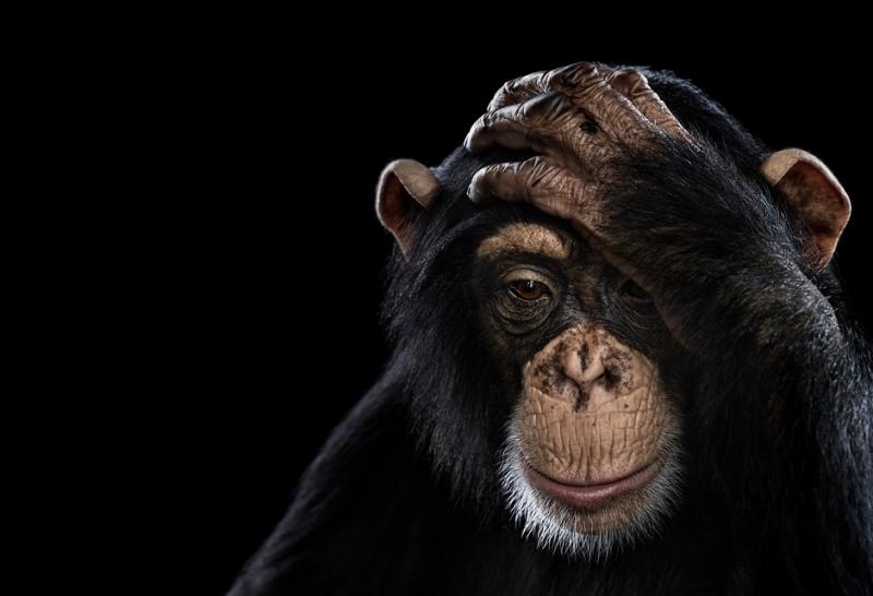 portrety-zhivotnyh-Bred-Uilson_6.jpg