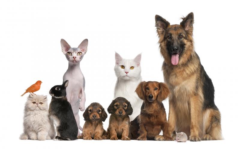 Dogs_Cats_Rabbits_White_background_Shepherd_Puppy_526372_3840x2400.jpg