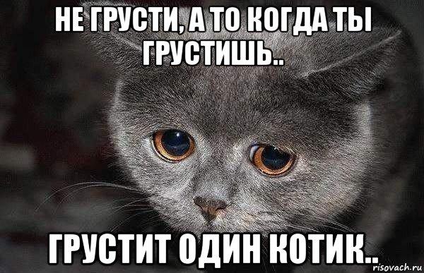 grustnyy-kot_170070086_orig_.jpg