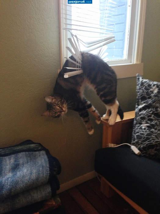 116_funny-cat-fails-4__605.jpg