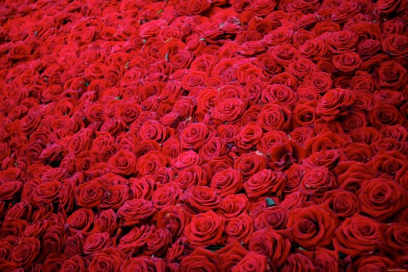 3000x2000_645369_www.ArtFile.ru.jpg