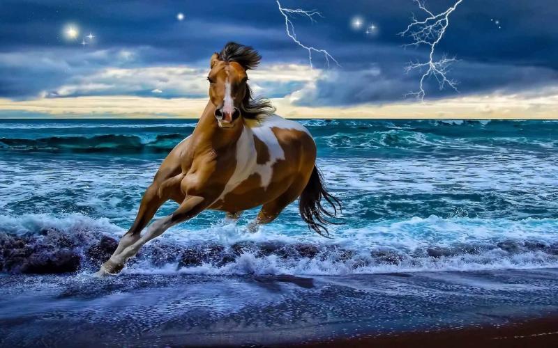 Beautiful-Horse-horses-22410538-1280-800.jpg