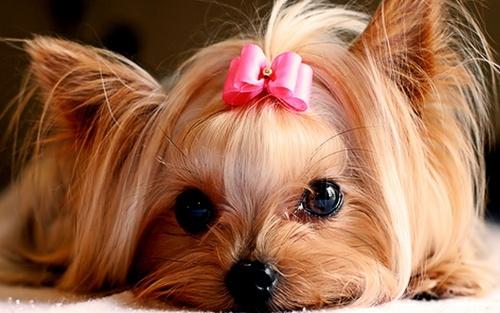 Cute-Puppies-puppies-22040893-500-313.jpg