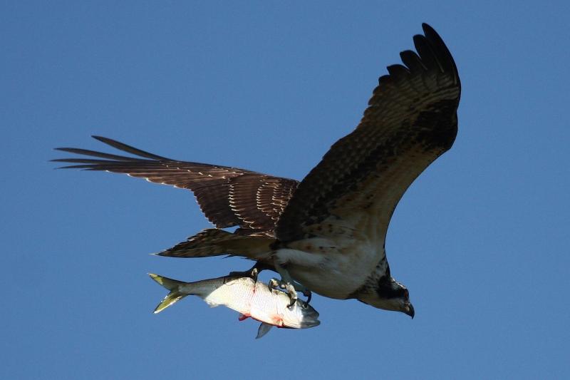 Fiskern.jpg