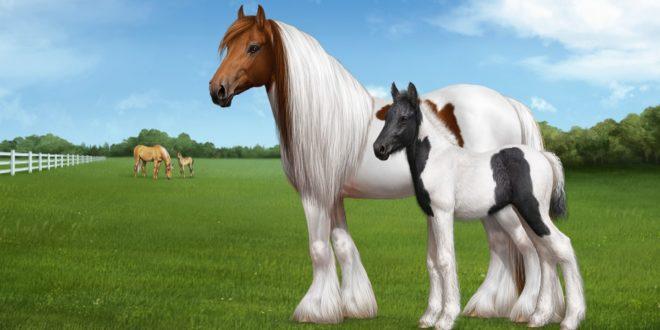 Gypsy-Horse-1-660x330.jpg
