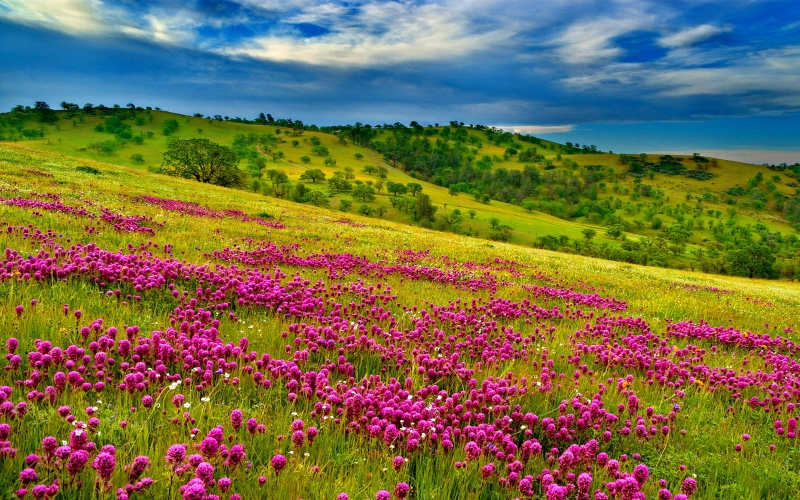 Nature-Summer-meadow-landscape-with-violet-flowers-forest-green-hills-with-grass-green-oak-trees-blue-sky-with-white-clouds-Wallpaper-HD-3.jpg