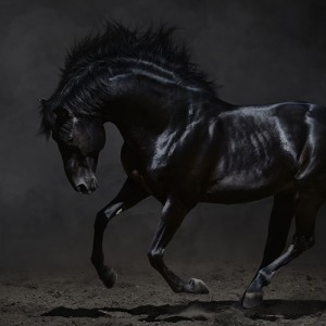 arome-black-mustang.jpg