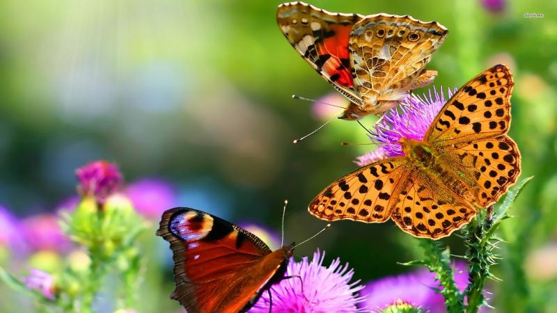 butterfly-nature-1.jpg