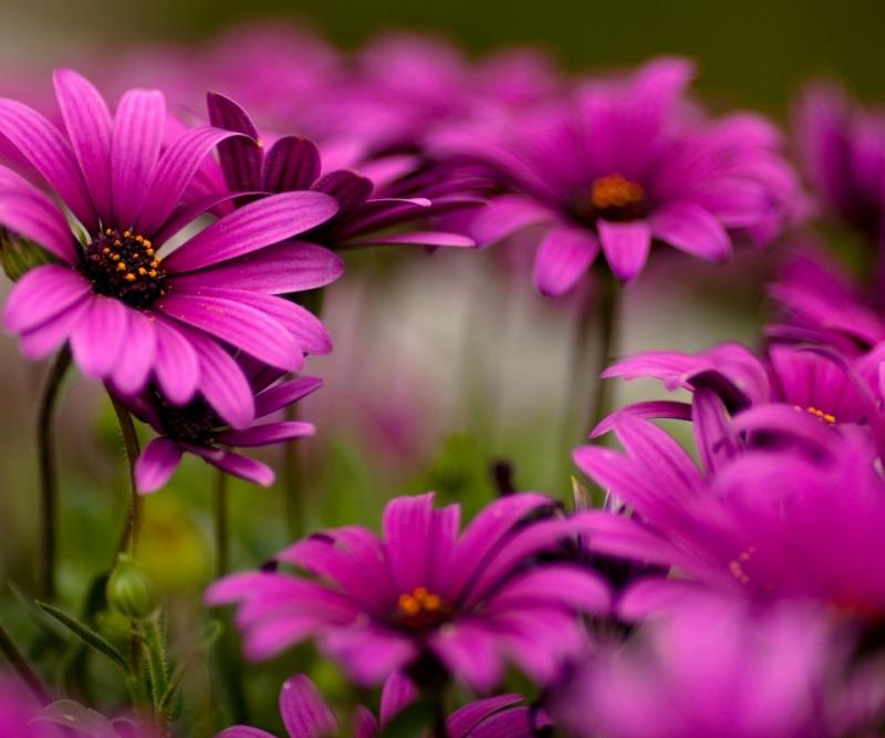 cveti-v137.orig.jpg