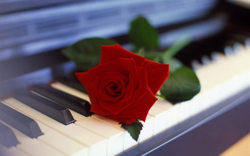 cvetok_roza_pianino_1920x1200.jpg