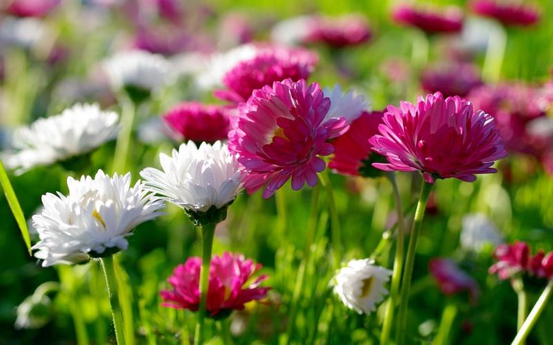 cvety-oboi28.jpg