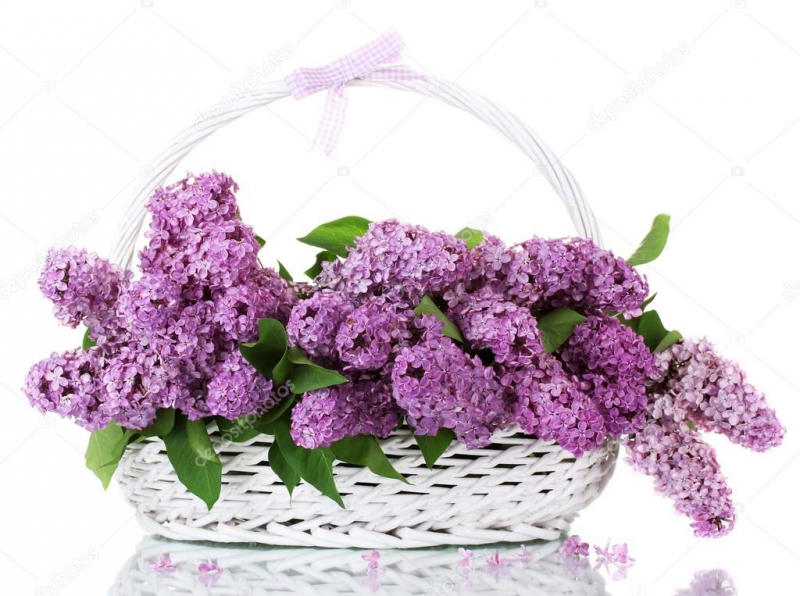 depositphotos_11351914-Beautiful-lilac-flowers-in-basket-isolated-on-white.jpg