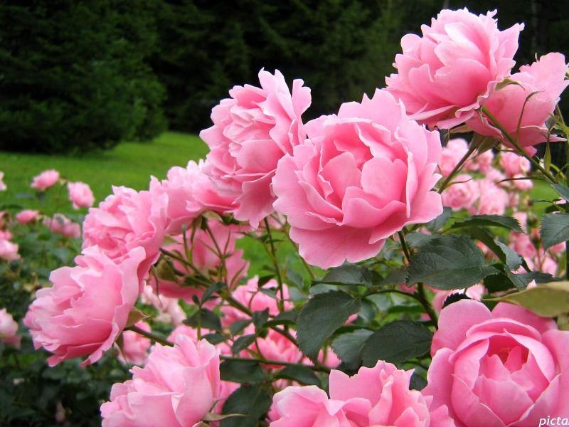 flowers621.jpg