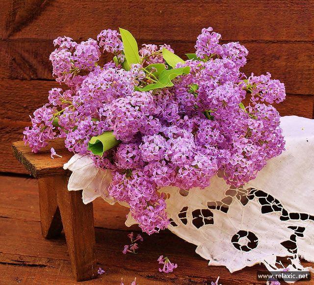 flowers_014.jpg