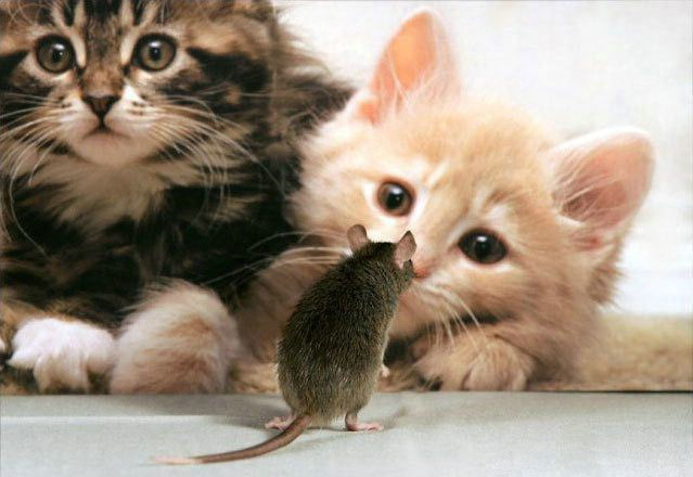 funny-cats-kittens-mouse-photo.jpg