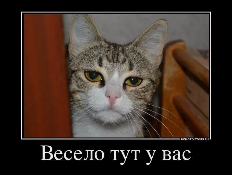 iN9NKY29A.jpg