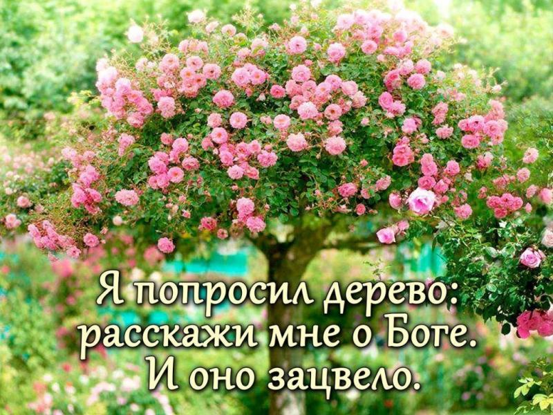 image_2017-07-09.jpg