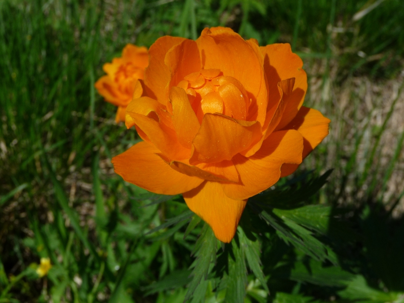 kartinki24_flowers_0004.jpg