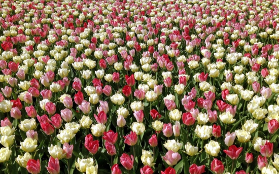 kartinki24_flowers_10304.jpg
