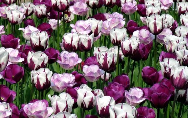 kartinki24_ru_flowers_319.jpg