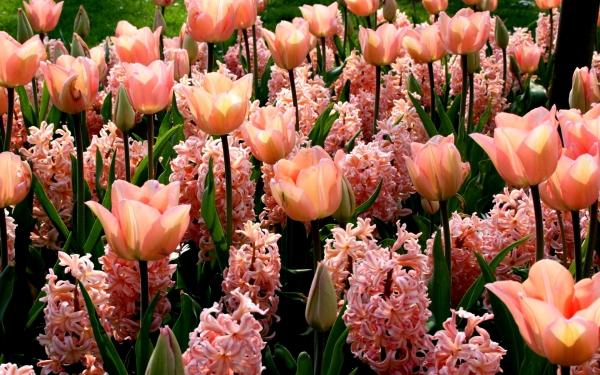 kartinki24_ru_flowers_354.jpg