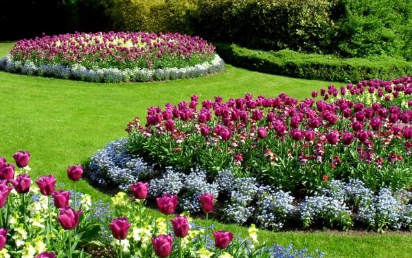 kartinki24_ru_tulips_71.jpg