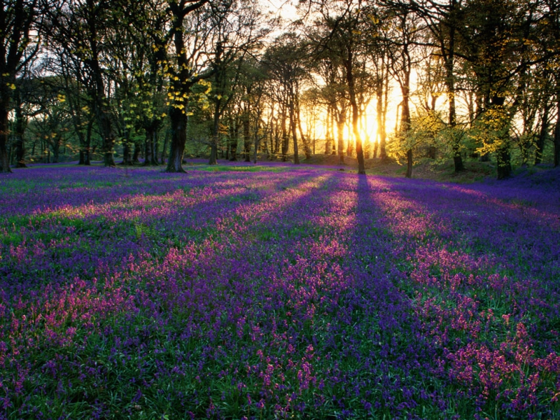 meadow-flowers-sunrise-forest-fleurs-des-champs-desktop-hd-wallpaper-large.jpg