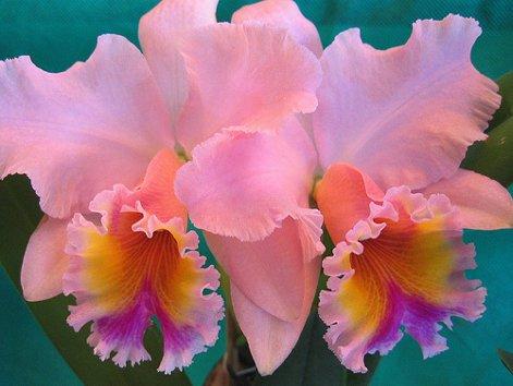 orchid3_500.jpg