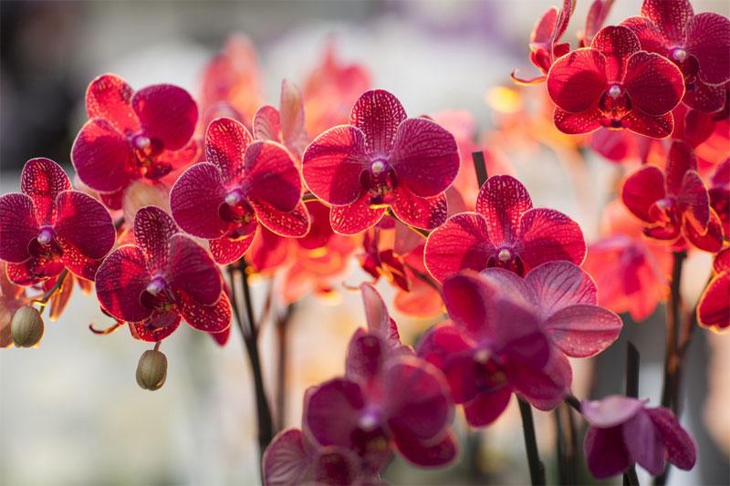 orhidea8.jpg
