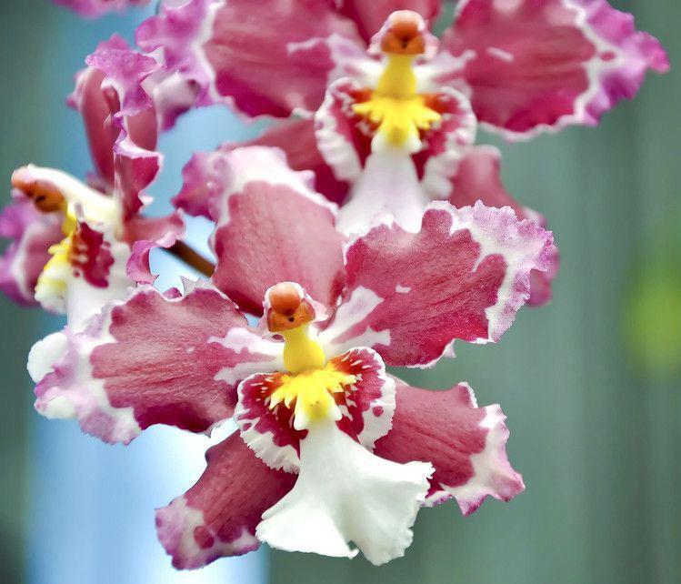 orhideja-66.jpg