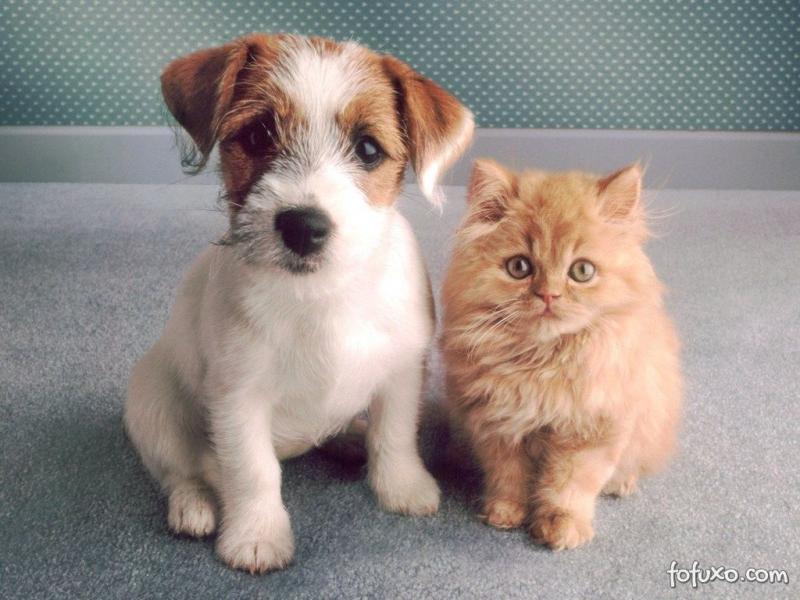 polemica-sobre-uso-de-animais-em-cursos-de-medicina.jpg