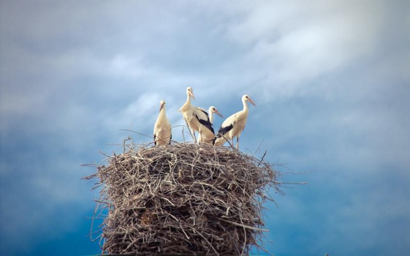 pticy-aisty-gnezdo-nebo.jpg