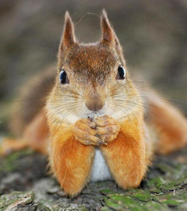 un-ecureuil-roux-qui-pose-comme-un-pro_183532_w620.jpg